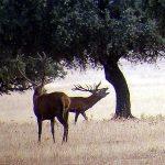 Escapadas naturales al Parque Nacional de Cabañeros en Castilla la Mancha. Ecoturismo para privilegiados en Ciudad Real