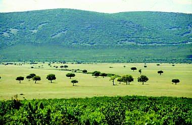 Parque Nacional de Cabañeros 3 ecosistemas