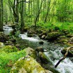 Naturaleza en Ávila | Ecoturismo y turismo activo en el Valle de Iruelas