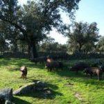 Escapadas a Córdoba: Los Pedroches | Pozoblanco, Hinojosa del Duque, Cardeña, Villanueva de Córdoba y otros rincones con encanto